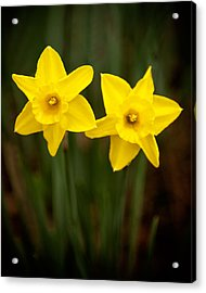 Yellow Twins Acrylic Print by Denis Lemay