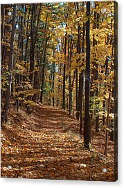 Yellow Wood Five Acrylic Print by Joshua House