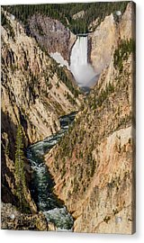 Yellowstone Falls From Artists Point Acrylic Print by Greg Nyquist