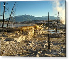 Yellowstone National Park - Minerva Terrace - 10 Acrylic Print by Gregory Dyer