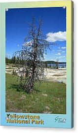 Yellowstone Np 003 Acrylic Print by Charles Fox
