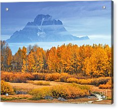 Yelow And Orange Autumn Grand Teton National Park Acrylic Print