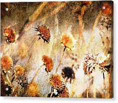 Yesterday's Flowers Acrylic Print by Alyce Taylor