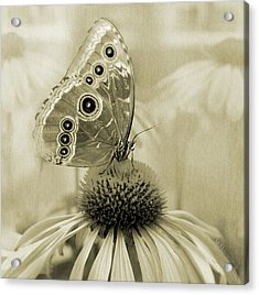 Yesterday's Visitor Acrylic Print by Melisa Meyers