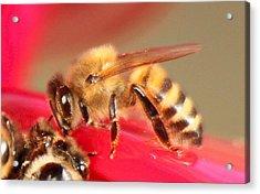 Yet Another Bee Acrylic Print