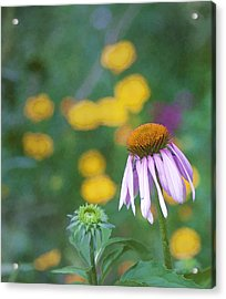 Acrylic Print featuring the photograph Yet Another Flower by John Crothers