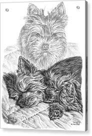 Yorkie - Yorkshire Terrier Dog Print Acrylic Print by Kelli Swan