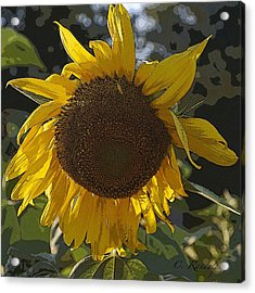 Acrylic Print featuring the photograph You Are My Sunshine by Cheri Randolph