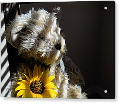 You Are My Sunshine Acrylic Print by Lynnette Johns