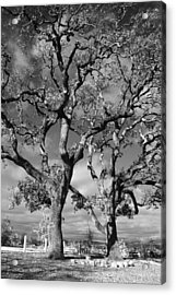 You Never Let Me Down Acrylic Print by Laurie Search