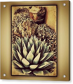 Young Agave Acrylic Print