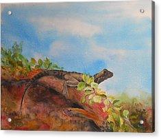Young Australian Water Dragon Acrylic Print by Carol McLagan