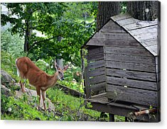 Acrylic Print featuring the photograph Young Buck At Treehouse Hopatcong by Maureen E Ritter