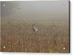Young Buck Acrylic Print by Charles Warren