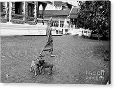 Young Dogs Acrylic Print by Dean Harte