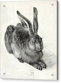 Young Hare, By Durer Acrylic Print by Sheila Terry