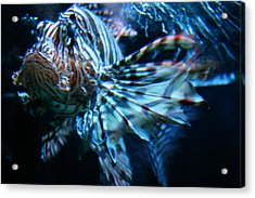 Your Lion Fish Acrylic Print