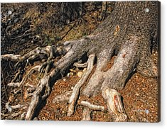 Your Roots Are Showing Acrylic Print