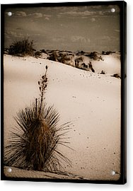 White Sands, New Mexico - Yucca Acrylic Print