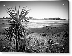 Yucca With A View Acrylic Print