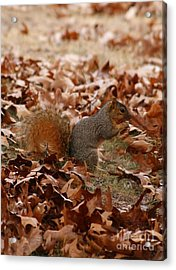 Acrylic Print featuring the photograph Yummy Snack by Julie Clements