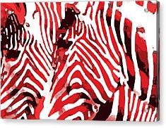 Z-bras Acrylic Print
