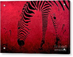 Zebra On Red Acrylic Print by Aimelle