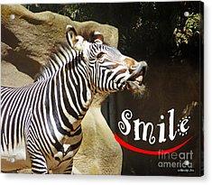 Zebra Smile Acrylic Print by Methune Hively