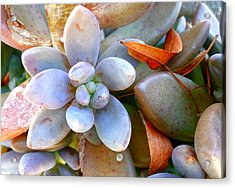 Zen Garden Acrylic Print by Sandrine Pelissier