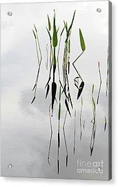 Zen Acrylic Print by Sabrina L Ryan