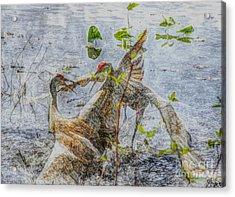 Zhandou Acrylic Print