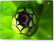 Acrylic Print featuring the photograph Zinnia  by Puzzles Shum