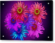 Zinnia Surprise Acrylic Print by Larry Bishop