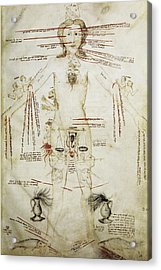 Zodiacal Man, 15th Century Acrylic Print by
