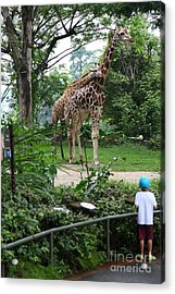 Acrylic Print featuring the photograph zoo by Milena Boeva