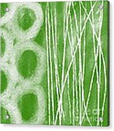 Bamboo Acrylic Print by Linda Woods