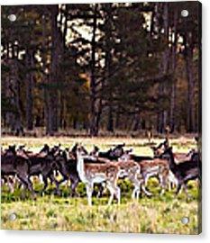 Deer In The Phoenix Park - Dublin Acrylic Print by Barry O Carroll