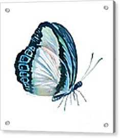 101 Perched Danis Danis Butterfly Acrylic Print by Amy Kirkpatrick