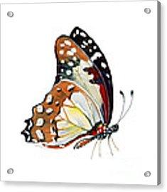 102 Perched White Lady Butterfly Acrylic Print by Amy Kirkpatrick