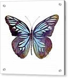 45 Pareronia Tritaea Butterfly Acrylic Print by Amy Kirkpatrick