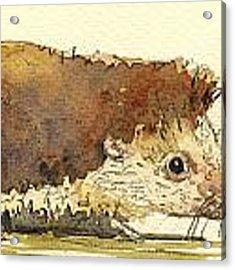 Hedgehog Acrylic Print