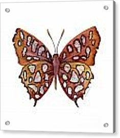 61 Hutchinson's Highflier Butterfly Acrylic Print by Amy Kirkpatrick