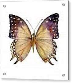 63 Great Nawab Butterfly Acrylic Print by Amy Kirkpatrick