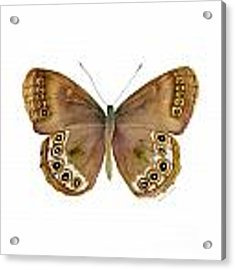 64 Woodland Brown Butterfly Acrylic Print by Amy Kirkpatrick