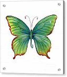 74 Green Flame Tip Butterfly Acrylic Print