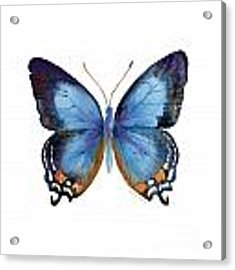 80 Imperial Blue Butterfly Acrylic Print