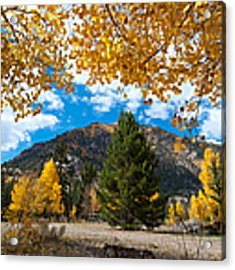 Autumn Scene Framed By Aspen Acrylic Print by Cascade Colors