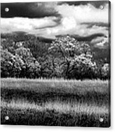 Black And White Trees Acrylic Print by Darryl Dalton