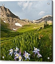 Handie's Peak And Blue Columbine On A Summer Morning Acrylic Print by Cascade Colors