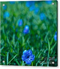 Blue Flower Acrylic Print by Julian Cook